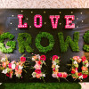 Love Grows Wild Sign