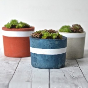 Youve still got time to make these DIY concrete succulenthellip